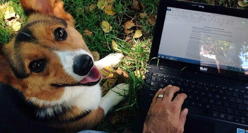 An author composed a gorgeous tribute to his late canine disguised as writing advice