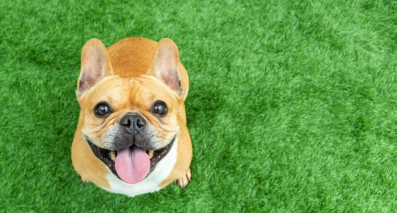 A Growing Group Of CBD Customers Isn't Even Human. But Its Members Appreciate CBDs' Anti-Pain Benefits — With A Resounding 'Woof!'